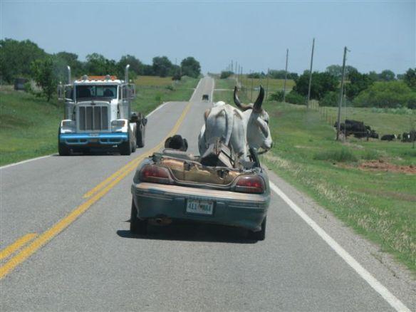 Oklahoma Bull Hauler