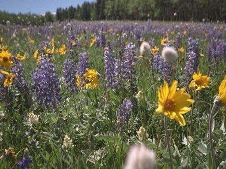 field-of-flowers1