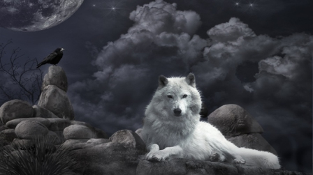 wolf-and-bird-wallpaper-free-background-desktop-images-541278