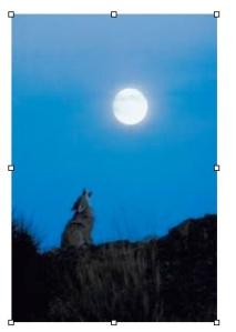 coyote jpg